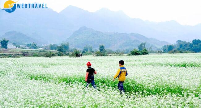 Ngắm hoa cải trắng mộc châu- Giải pháp du lịch mùa thấp điểm